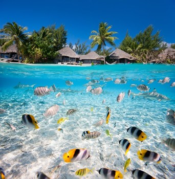 Bora Bora Gay Weddings Gay Wedding Venue In Bora Bora